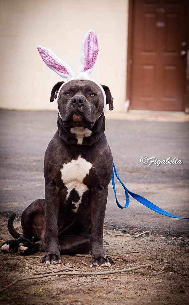 Easter Bullie - Figabella Photography